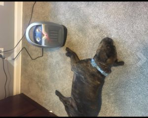 Once you find the perfect space heater for you and your home, there are still some pet-safety aspects to consider. If you have a cat, avoid placing the heater on a tabletop. Cats enjoy jumping and climbing, which means there's a good chance they'll use the heater as their new playground.